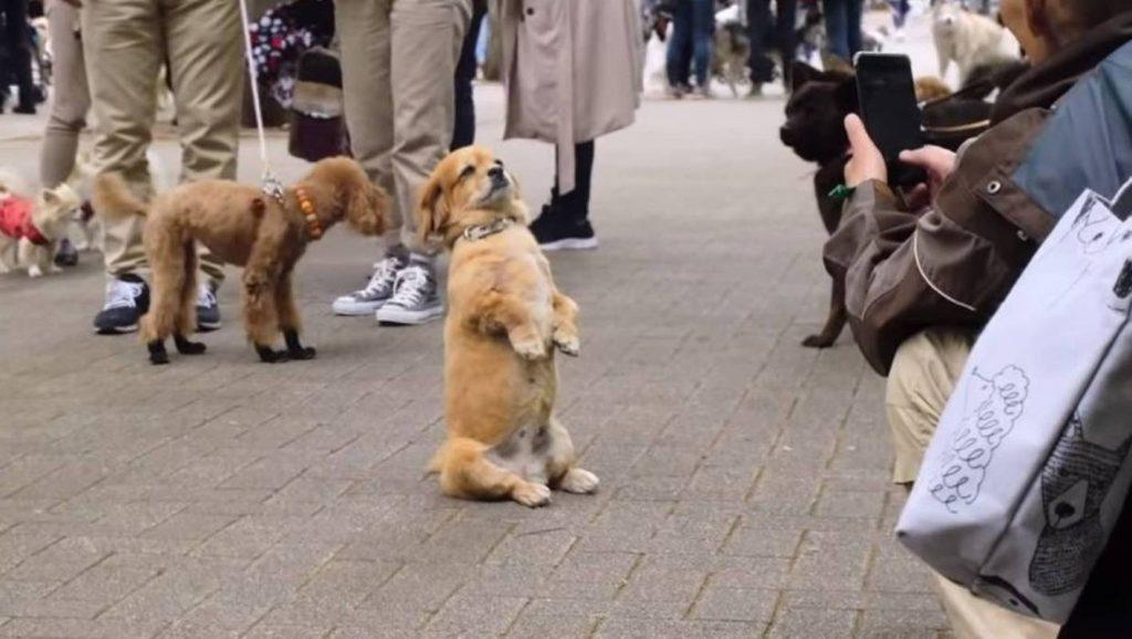 netflix dog second chance